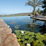 natural pools biotop-swimmingteich-design-teich-baden-mit-unendlicher-aussicht-israel-west-galilea
